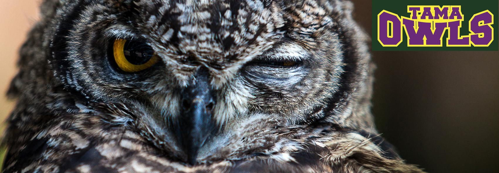 OwlsNenga2015j2